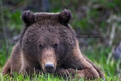 DSC_9584 grizzly©DC